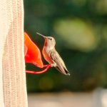 Panasonic Lumix 45-150mm Seattle Hummingbird